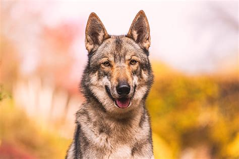 12096 professional photographs of animals pet photography tips get your to look at the