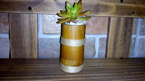 bambu in vaso vaso de bambu elo7