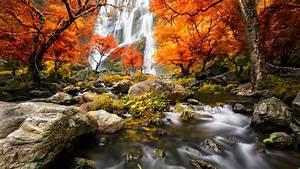 Outono, floresta, cachoeiras, árvores, folhas vermelhas ...