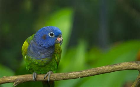 27 different types of parrots with picture and their names