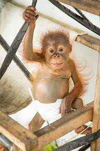 305 best images about i WANT a monkey!!!! on Pinterest ...