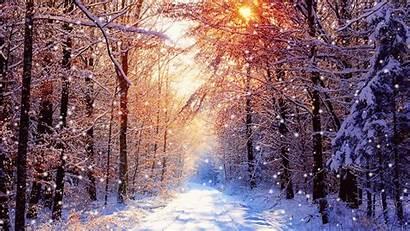 Winter Desktop Forest Snow Background Backgrounds Nature