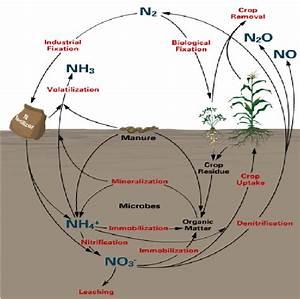 Nitrogen Cycle  61