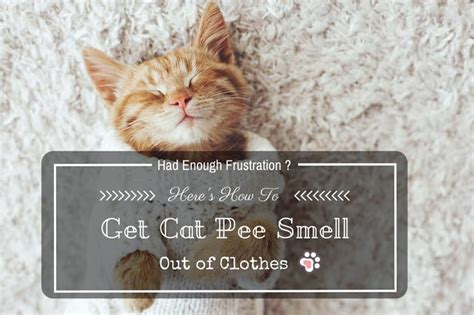 how to get cat smell out of clothes had enough frustration here s how to get cat pee smell out of clothes tinpaw
