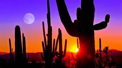 Arizona Sunset Tucson Saguaro National Park Near