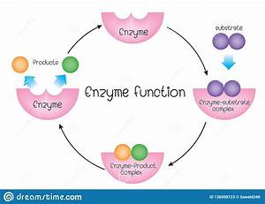 Enzyme Function Stock Vector  Illustration Of Polymer