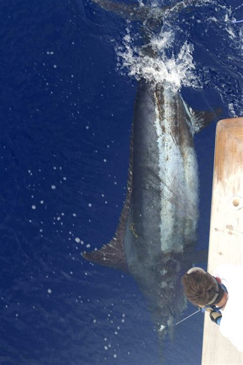 How The Experts Catch Trophy Fish Fishing World