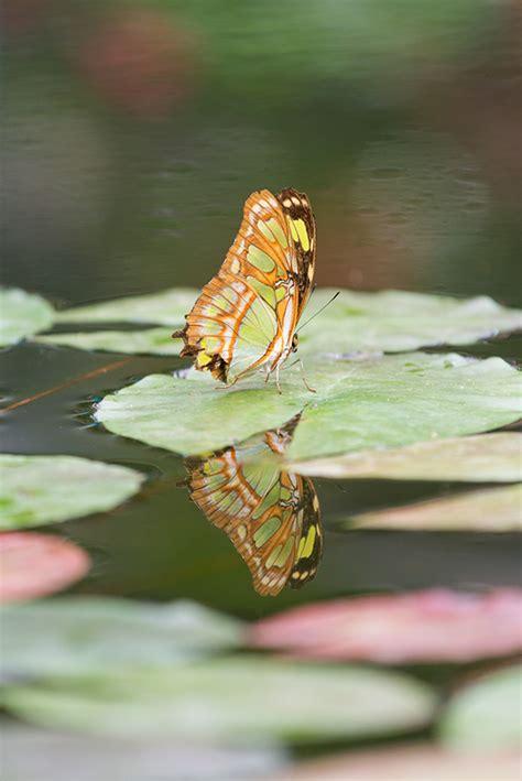 Botanischer Garten Augsburg Lichter by Schmetterlinge Im Botanischen Garten Augsburg Aus Licht