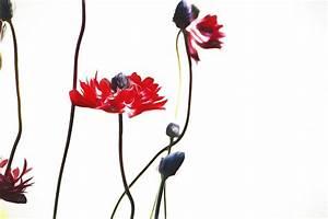 Blumen Bilder Gemalt : bild gemalt malerei kostenloses foto auf pixabay ~ Orissabook.com Haus und Dekorationen