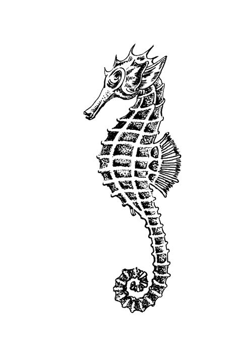 clipart illustrations seahorse clipart illustration free stock photo