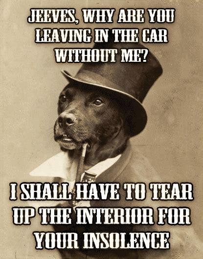 Benson Dog Meme - the gallery for gt old money dog meme