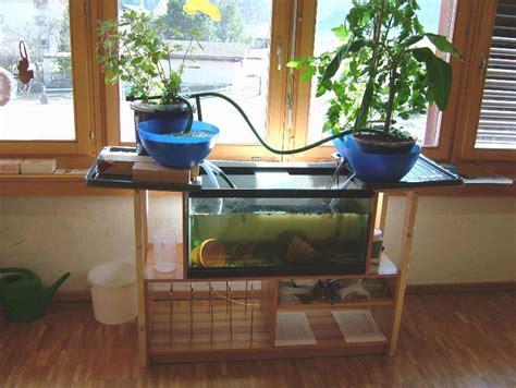 fish tank aquaponics system   proper garden