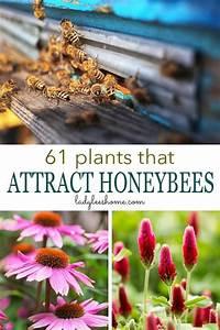 61 Plants That Attract Honeybees