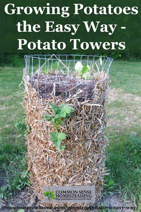 how to potatoes from garden growing potatoes the easy way potato towers