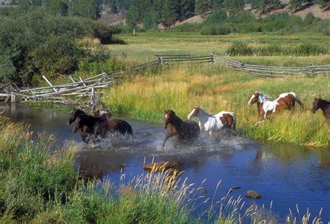 absorbine lends  hoof  louisiana horses   nw