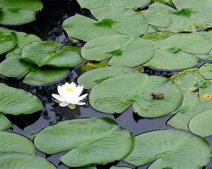 Frog On Lily Pad Photograph by George Jones