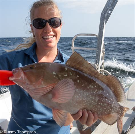 gulf grouper fish waters florida limit bag federal changes found commonly natural north state effective