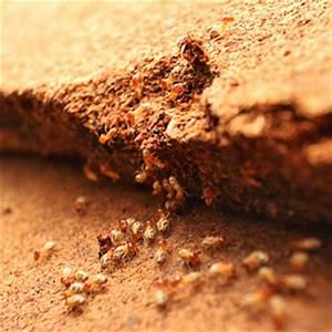 Termite inspection nashville termite control nashville for Termite letter nashville tn