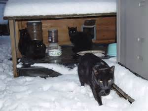 cat building how to build a feral cat shelter for the winter catster