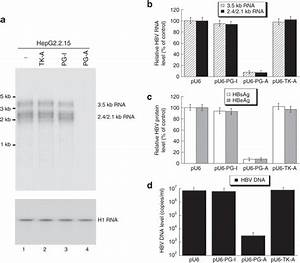 Egs Protein Expression And