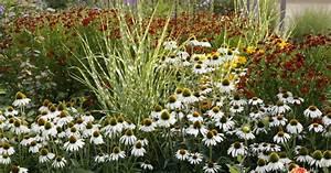 Gräser Im Garten Gestaltungsideen : gestaltungsideen mit gr sern und stauden mein sch ner garten ~ Eleganceandgraceweddings.com Haus und Dekorationen