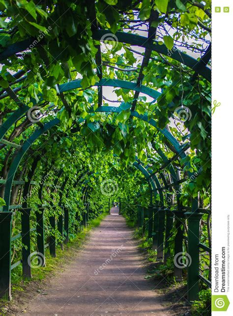 Green Archway In The Park At Summer, Plants Tunnel Pergola