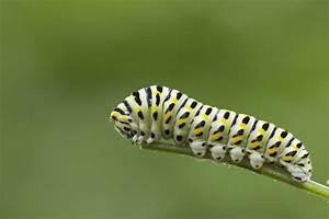 10 Powerhouse Perennials For Caterpillars In The Garden