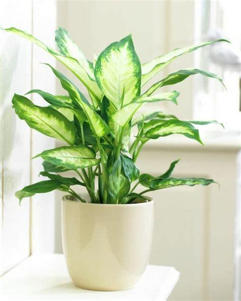 Giftige Zimmerpflanzen Für Katzen giftige zimmerpflanzen 20 giftpflanzen die sie kennen
