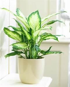 Amaryllis Giftig Für Katzen : giftige zimmerpflanzen 20 giftpflanzen die sie kennen sollen ~ Frokenaadalensverden.com Haus und Dekorationen