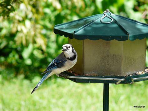 bird pics birds of western pennsylvania northwestern pa