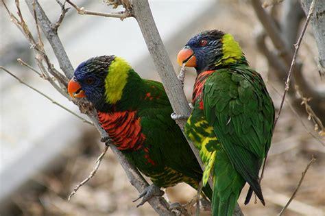 birds denver zoo march 2008 flickr photo sharing