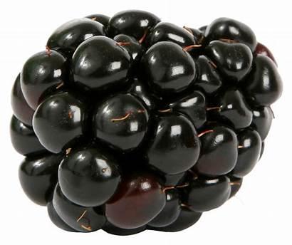 Blackberry Single Fresh Fruits Berry Pngpix Transparent