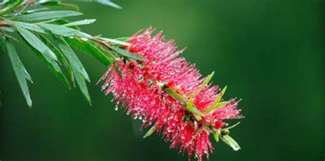 Australian Plants Planting Guide & Tips Lifestyle