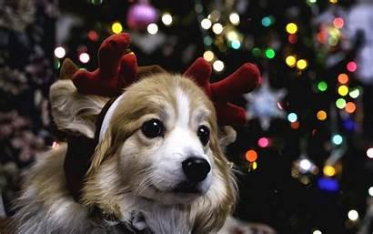 Christmas Puppy Wallpapers Dog Animals Wallpapersafari Widescreen