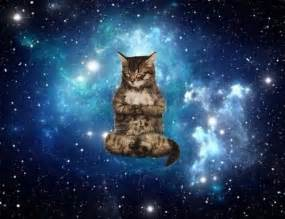 space cats 17 best images about meditation corner on