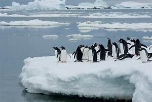 Pingouin Sur La Banquise : le climato scepticisme d cryptage des arguments travers les dynamiques climatiques ~ Melissatoandfro.com Idées de Décoration