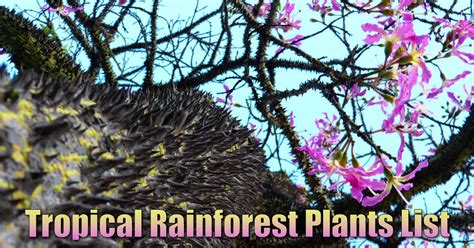 tropical plants list rainforest trees and plants www pixshark com images galleries with a bite