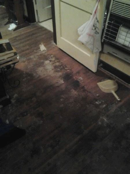 Urine Hardwood Floors Removal by Removing Pet Urine Stains From Hardwood Floors Thriftyfun