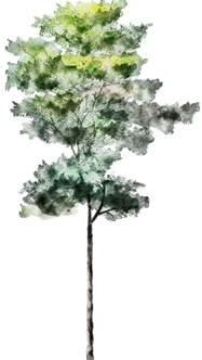 59 best vegetazione/texture images on Pinterest ...