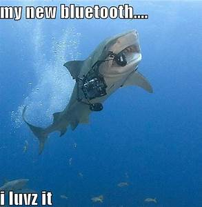 Funny Shark Quotes. QuotesGram