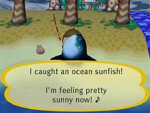 Ocean Sunfish Animal Crossing Wiki Fandom Powered By Wikia