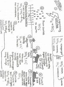 Carbon Cycle Diagram Worksheet Netvs  U2014 Db