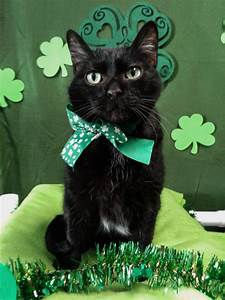 Happy St Patrick's Day from The Cat's Meow – Cat Questions