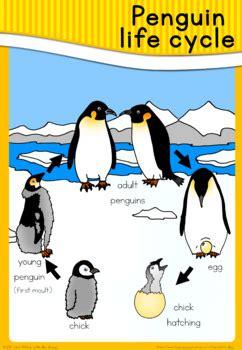 penguin life cycle poster   blue orange tpt