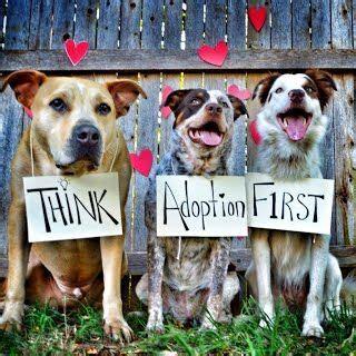 adoption     great