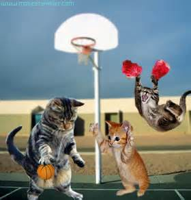 basketball cat cats basketball bite ca