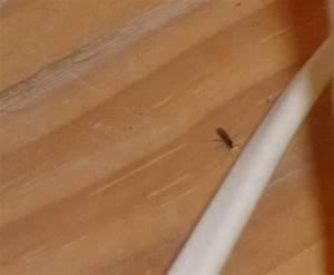 Mini Fliegen Am Fenster : mini fliegen plage was soll ich tun haus sch dlinge fruchtfliegen ~ Watch28wear.com Haus und Dekorationen
