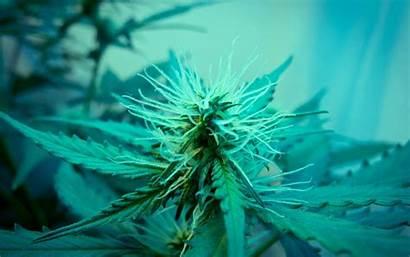 Desktop Wallpapers Marijuana Cannabis Computer Trippy Weed