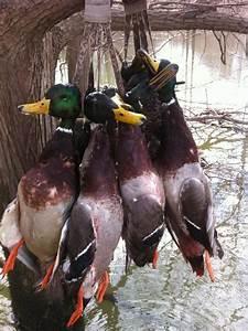 Premier Flight Guide Service Arkansas Ducks Photo Gallery