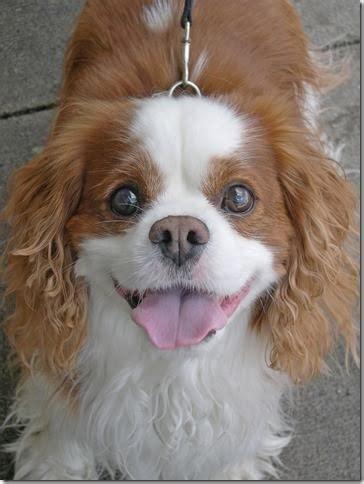 dog day  classical  calms anxious dogs wosu radio
